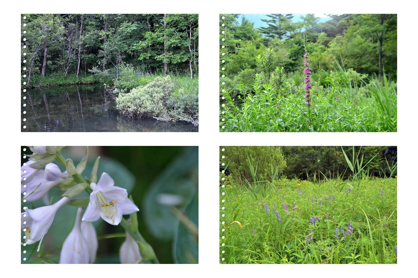 page5箱根湿性花園