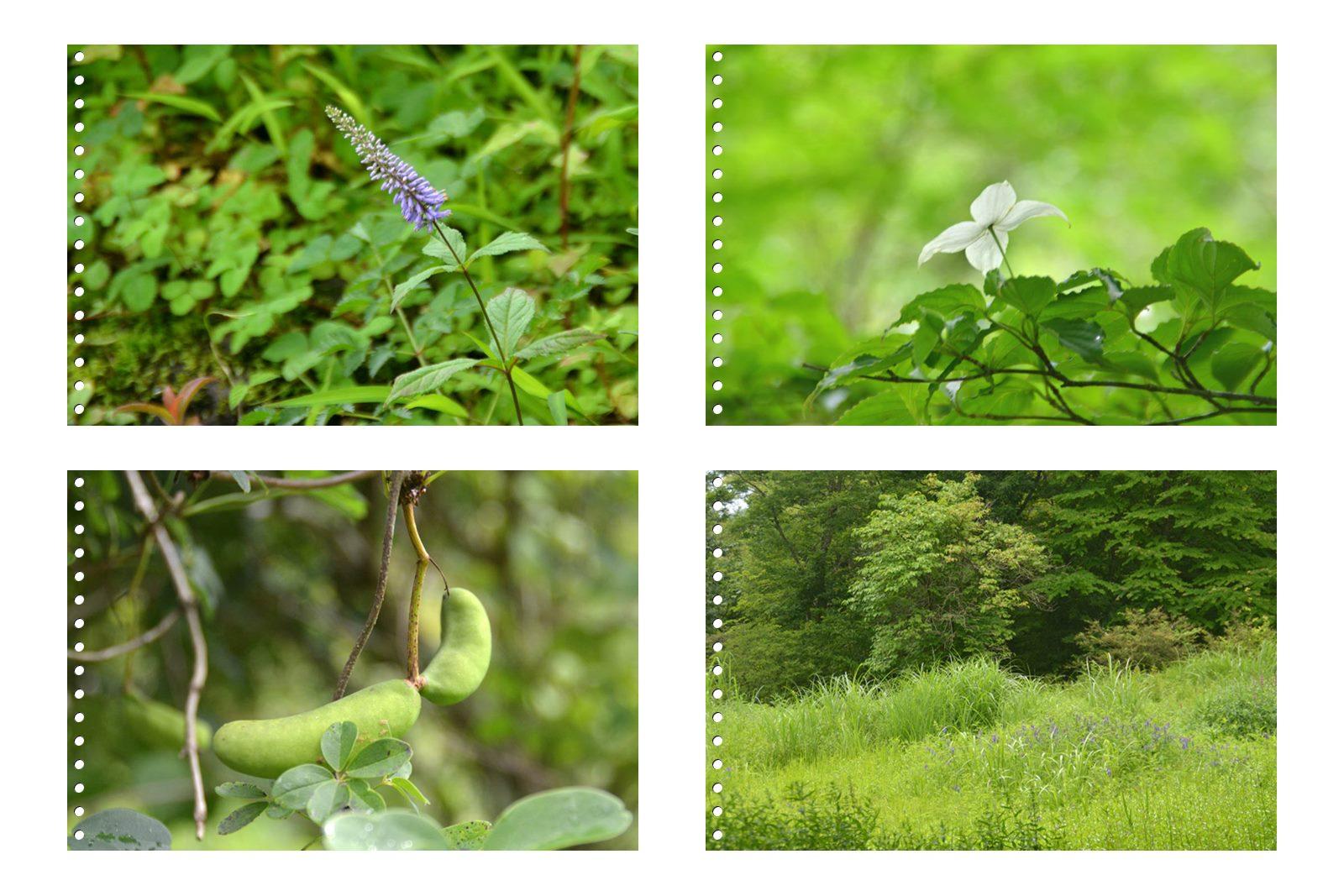 page6箱根湿性花園