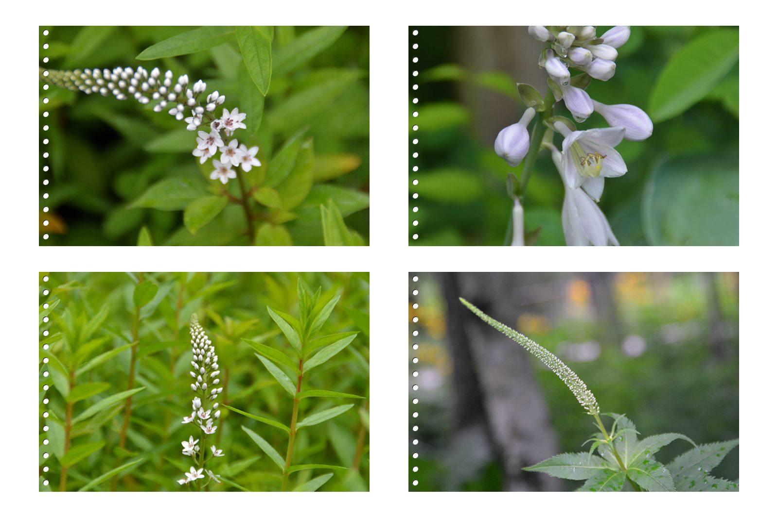 page7箱根湿性花園