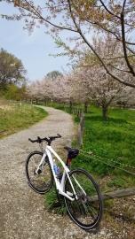 いつもは寄らない、上尾丸山公園。ここに公園があることに初めて気がついた(笑)。桜がかなり綺麗に残っていて得した気分でした。