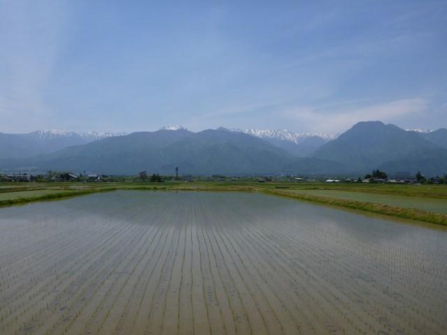 uyamasi1 (1)