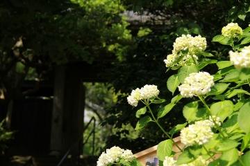 525 円覚寺