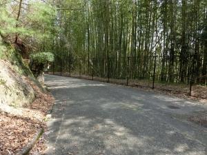 20150322_30竹林細い道