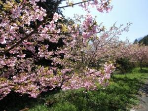 20150328_12桜並木