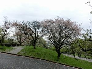 20150405_02枚岡神社梅林