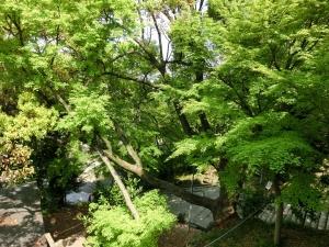 20150425_06四条畷神社