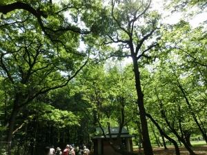 20150502_03小金井公園