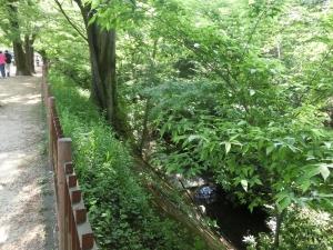 20150502_06玉川上水緑道