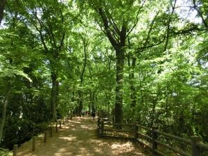20150503_16玉川上水緑道