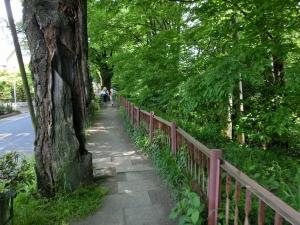 20150503_17玉川上水緑道