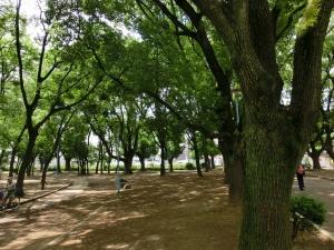 20150620_06平野白鷺公園