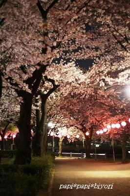 夜桜散歩2