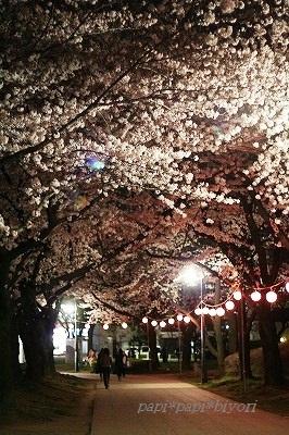 夜桜散歩3