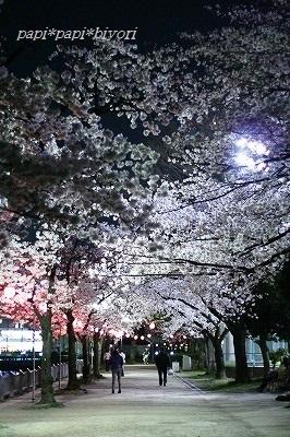 夜桜散歩5