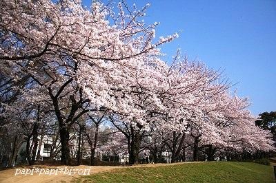 青空と桜☆2015
