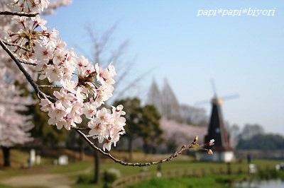 青空と桜★2015