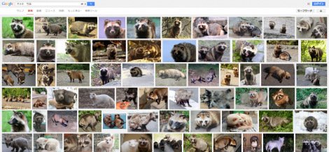 タヌキ 写真 Google 検索