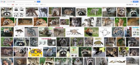 アライグマ 写真 Google 検索