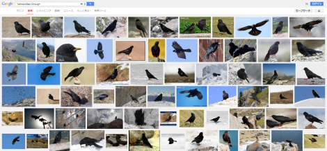 キバシガラス Yellow billed Chough Google 検索