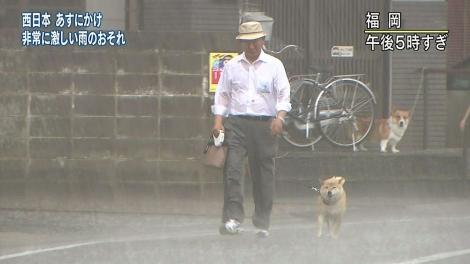 ずぶ濡れの柴犬を散歩させる老男性を軒下から見つめるコーギー