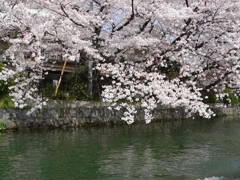 岡崎公園南2-20090405