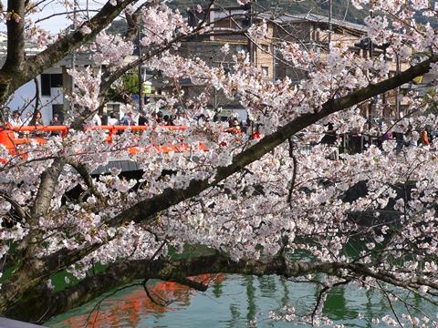 岡崎公園南5-20090405