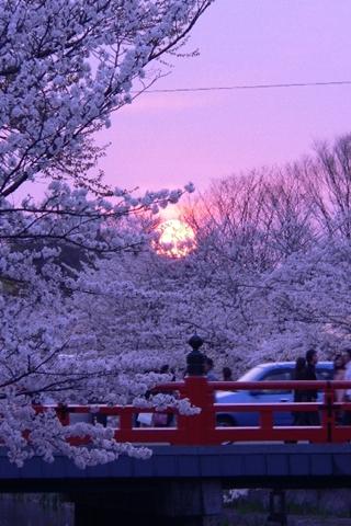 岡崎公園南12-20080405