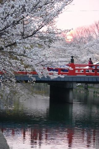 岡崎公園南13-20080405