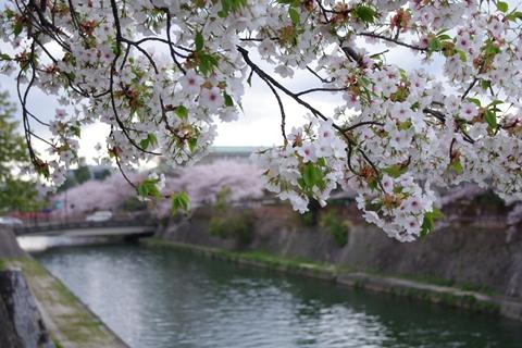 岡崎公園南0-20100410