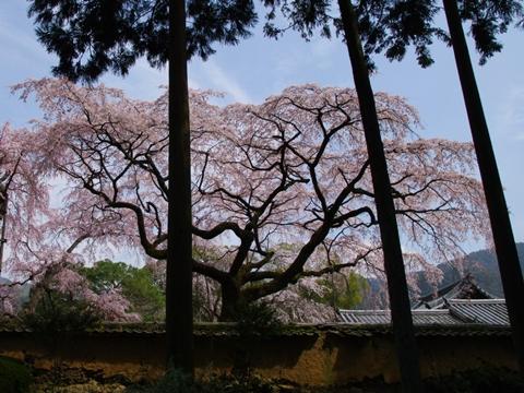 daigoji醍醐寺1-20140329-132814