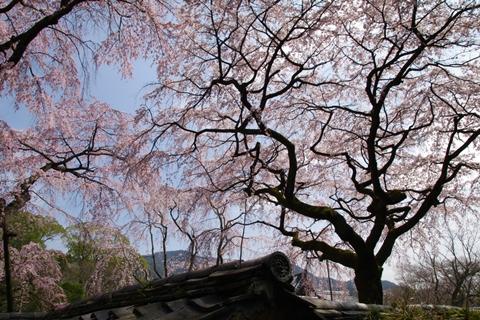 daigoji醍醐寺1 (3)-20140329-133611