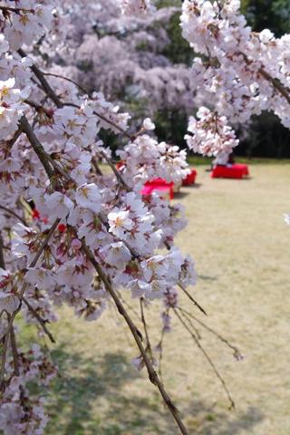 daigoji醍醐寺1 (4)-20140329-134017