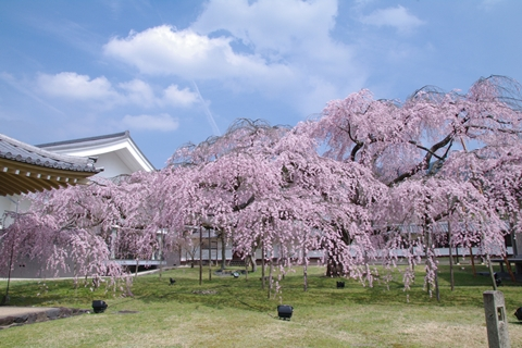 daigoji醍醐寺1 (7)-20140329-135650