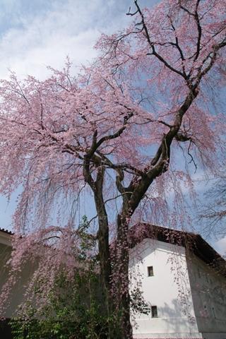 daigoji醍醐寺1 (8)-20140329-140435
