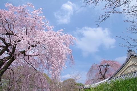 daigoji醍醐寺1 (9)-20140329-140915