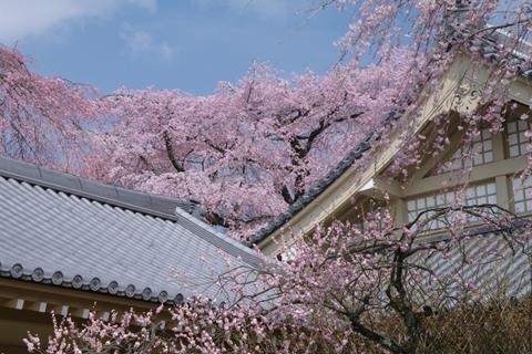 daigoji醍醐寺1 (10)-20140329-141049