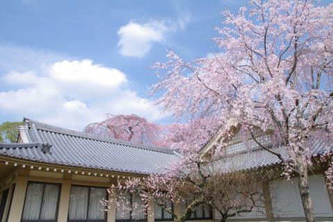 daigoji醍醐寺1 (11)-20140329-141138