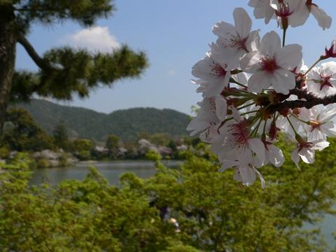 daikakuji大覚寺 (11)-20090412-112446