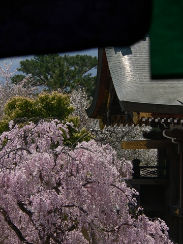 daikakuji大覚寺 (13)-20090412-111711