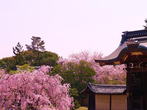 daikakuji大覚寺 (14)-20090412-110929