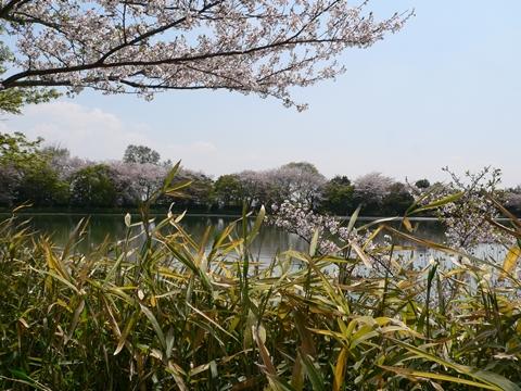 daikakuji大覚寺 (8)-20090412-114249