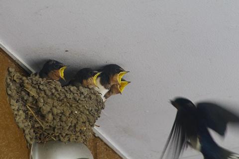 社宅の鳥 (3)-20150523