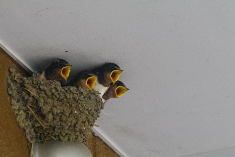 社宅の鳥 (6)-20150523