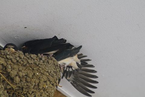 社宅の鳥 (8)-20150523