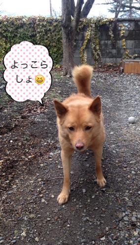 fc2blog_20150116191541df0.jpg