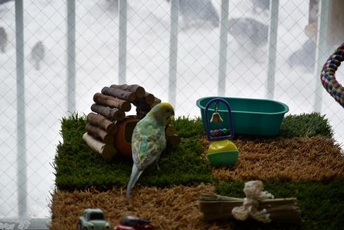 ハトと雀を見つめるディジー1