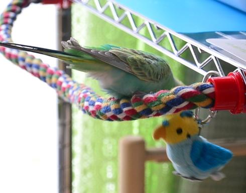 青い鳥さんLOVE1-1
