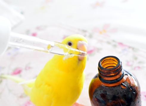お薬の飲み方1-1