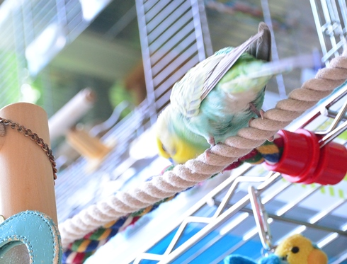 ねえ、青い鳥さん1