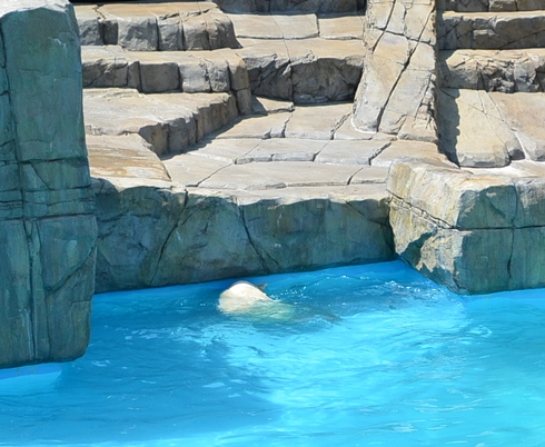 動物園 192-21しろくま